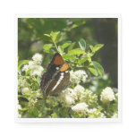 California Sister Butterfly in Yosemite Napkin
