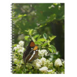 California Sister Butterfly in Yosemite Notebook