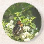 California Sister Butterfly in Yosemite Sandstone Coaster
