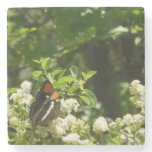 California Sister Butterfly in Yosemite Stone Coaster