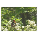 California Sister Butterfly in Yosemite Tissue Paper