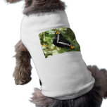 California Sister Butterfly Pet Clothing