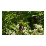 California Sister Butterfly Print