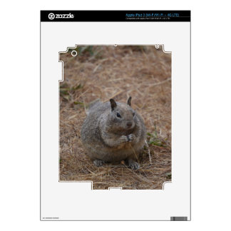 California Spotted Ground Squirrel iPad 3 Decals
