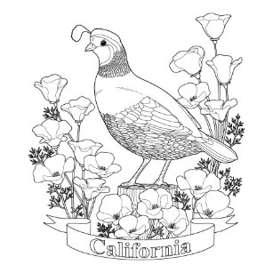california state bird and flower coloring page napkin