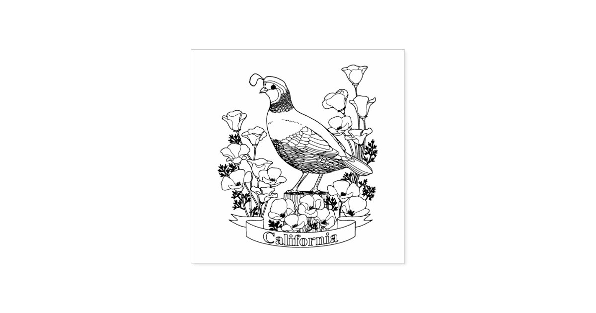 california state bird coloring pages - photo#25