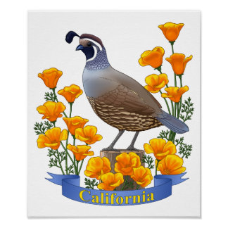 California State Bird Quail & Golden Poppy Poster