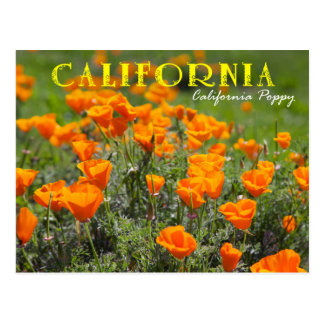 California State Flower: California Poppy Postcard