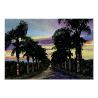 California Sunset showing Palms Poster