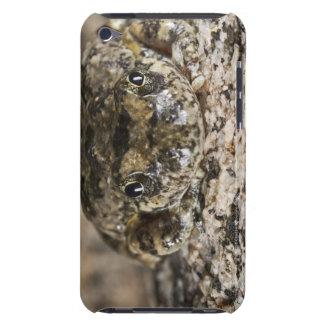 California tree frog,(Pseudacris cadaverina), Barely There iPod Covers