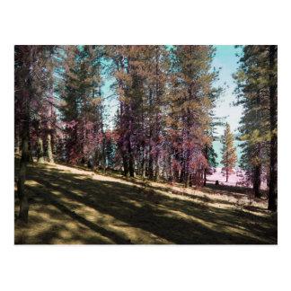 California Trees Postcard