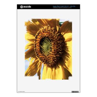 California, un girasol gigantesco (Helianthus) 1 iPad 3 Pegatina Skin