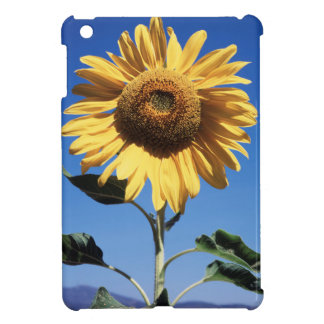 California, un girasol gigantesco (Helianthus) 3