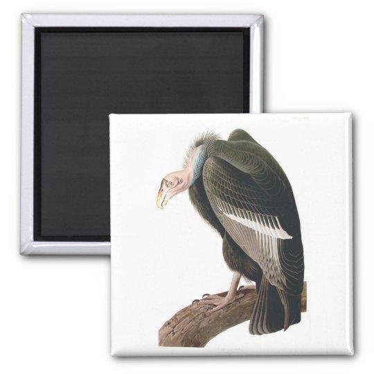 California Vulture (Condor), Audubon Fine Art Magnet