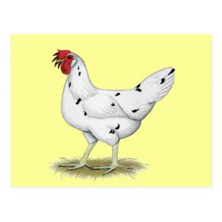 California White Hen Postcard
