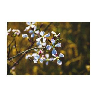 California wild flowers canvas print