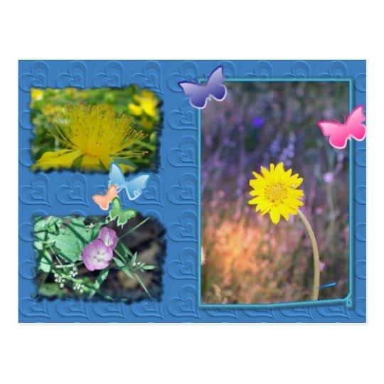 California Wildflower Post Card