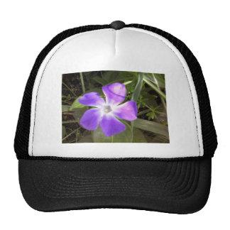 California Wildflower Trucker Hat