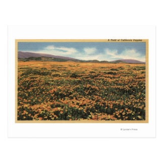 CaliforniaA Field of Californian Poppies Postcard