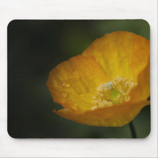 Californian Poppy Flower - After the Rain Mouse Pad
