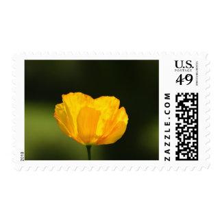 Californian Poppy Postage