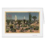 CaliforniaVarieties de los cactus del desierto Tarjetón