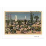 CaliforniaVarieties de los cactus del desierto Tarjetas Postales
