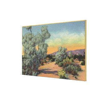 CaliforniaView of Smoke Trees in Desert Canvas Print