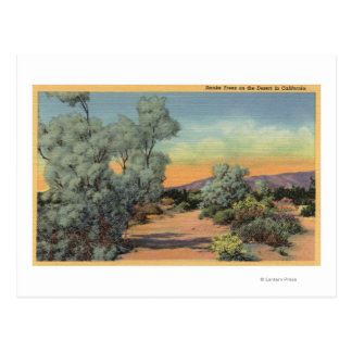 CaliforniaView of Smoke Trees in Desert Postcard