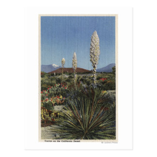 CaliforniaYucca Cacti in Bloom in Desert Postcard