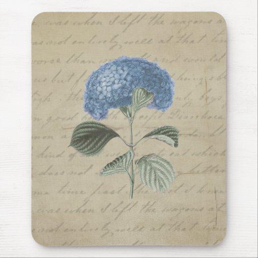 Caligrafía antigua floral del Hydrangea azul del Alfombrillas De Ratón