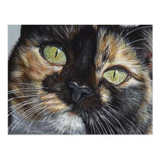 Cali's Stare Tortie Tortoiseshell Cat Painting Art Postcard