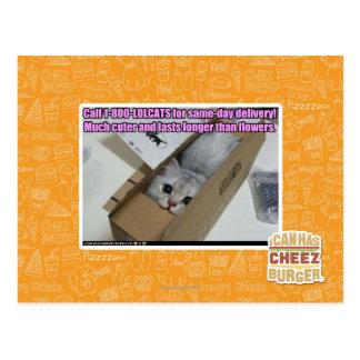 Call 1-800-LOLCATS Postcard