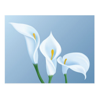 Calla flowers post cards