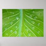 Calla leaf with dew drops close-up poster
