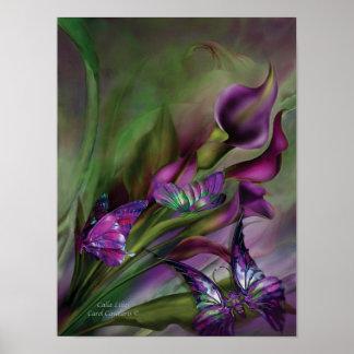 Calla Lilies Art Poster/Print Poster