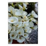 Calla Lilies growing at  Lily Plantation, Taiwan Greeting Card