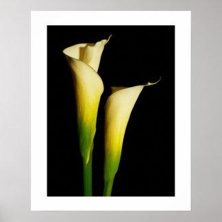 Calla Lilies Print