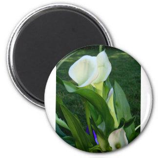 Calla Lillies (white) Magnet