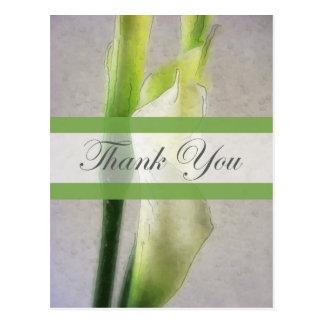 Calla Lily 1 Watercolor Thank You Postcard