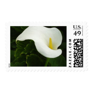 Calla Lily 8 Painterly Postage