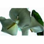 Calla lily acrylic cut outs
