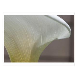 Calla lily curve postcard