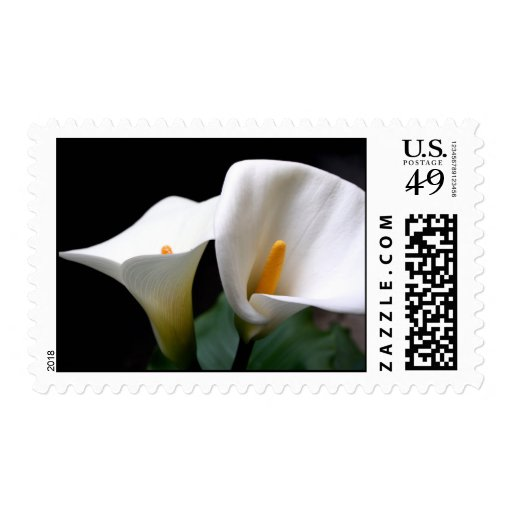 Calla Lily Flowering Postage Stamp
