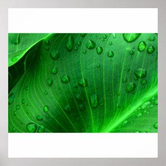 Calla Lily Leaf. Print