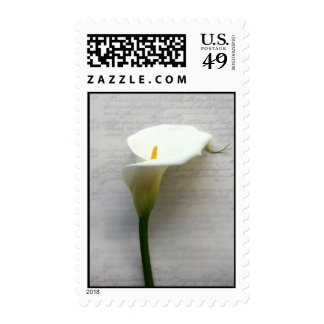calla lily on old handwriting postage stamp