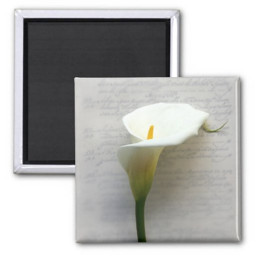 calla lily on old handwriting square magnet