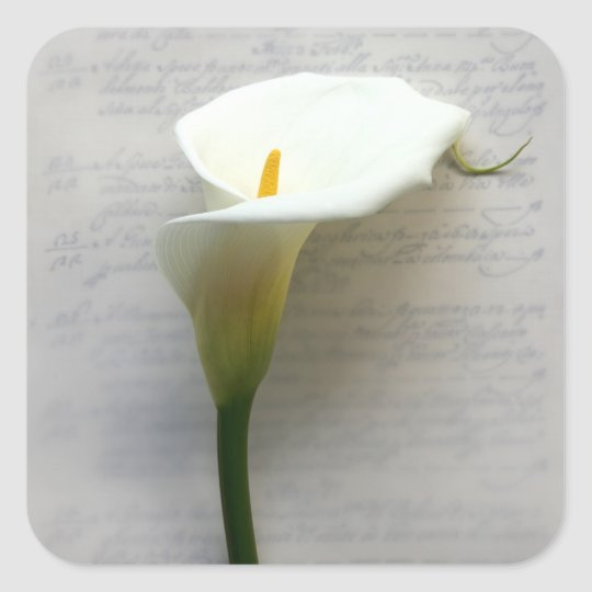calla lily on old handwriting square stickers