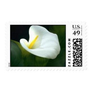 Calla Lily Postage