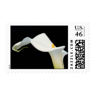 Calla Lily Postage Stamp